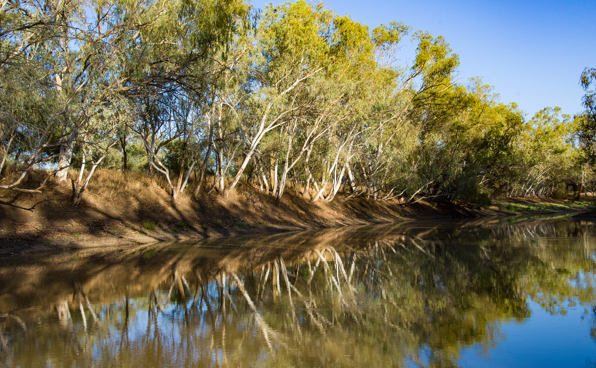 Dawn - Isisford - relfections on barcoo river