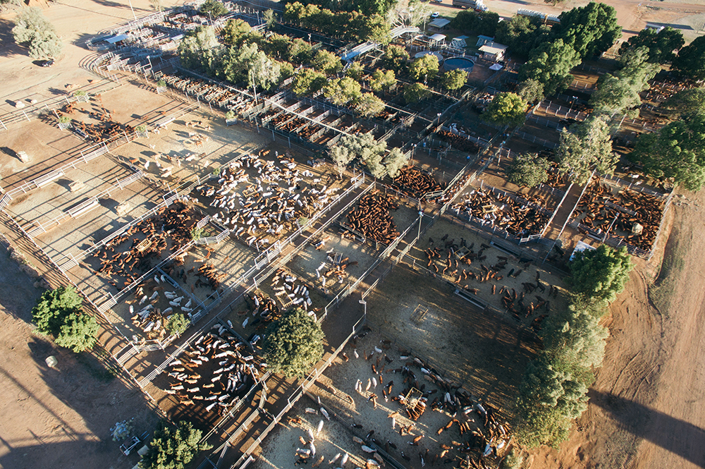 Blackall-Saleyards
